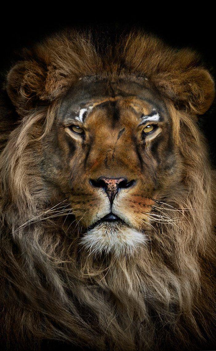 LION by LEVIATAN-666.deviantart.com on @DeviantArt