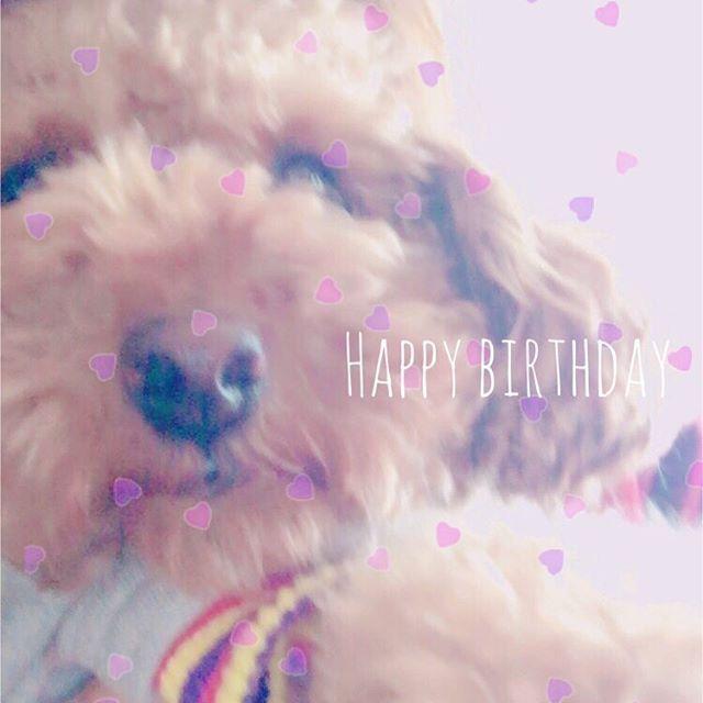 ** 高橋家のおてんば娘(2号)が 2歳になりました👏💞 ずっとずっと元気でいてね🤗 ・ #0427#愛犬#お誕生日#おめでとう#トイプー#トイプードル#お座りできない#なにもできない#愛嬌だけはある#ココちゃん#大好き#🐶 ・