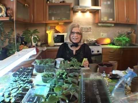 Как правильно подкармливать рассаду томатов - YouTube