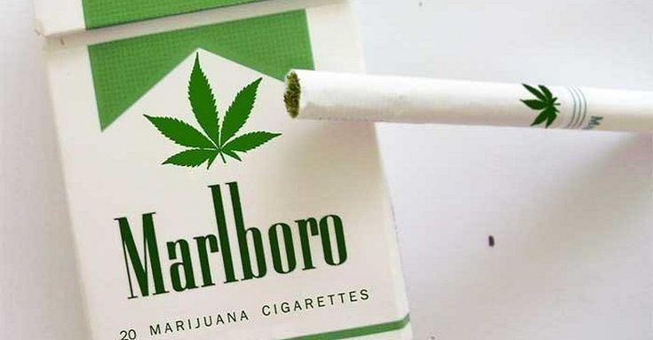 La tabacalera Philip Morris está a punto de dar un nuevo paso en lo que a sus productos refiere ya que muy pronto el tabaco no va a ser lo único producto para fumar que venderían por una reciente incursión en el mundo de la marihuana que a muchos a llamado la atención. Si bien … Sigue leyendo Phillip Morris anuncia la venta de sus primeros cigarros de marihuana →