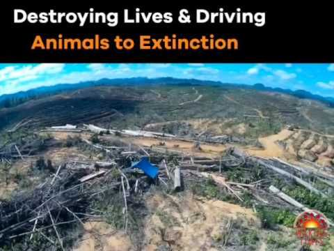 Destruction of the Indonesian Rainforest