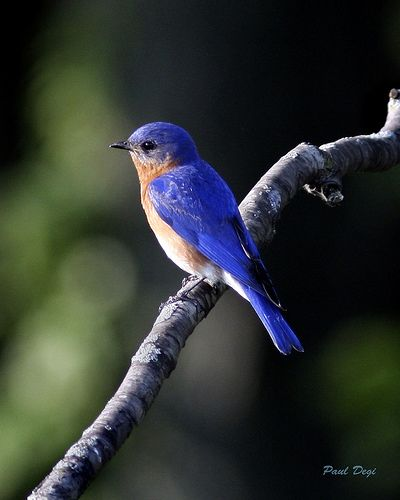 29 Best Images About Michigan Birds And Humming Birds On