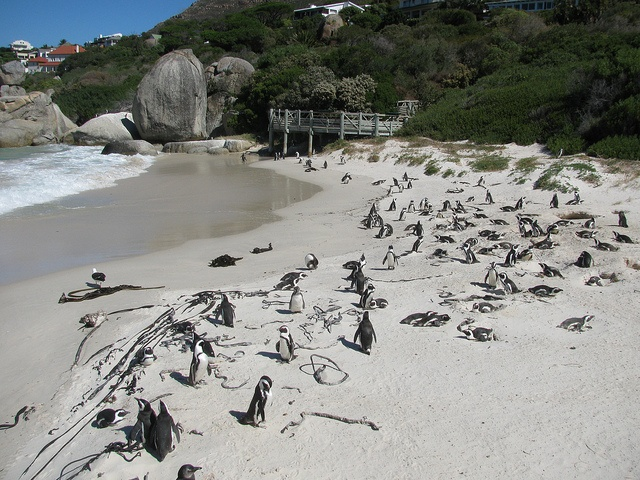 The Boulders - Cape Town, South Africa