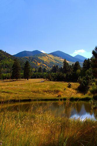 Lockett Meadow - Flagstaff Arizona. → For more, please visit me at: www.facebook.com/jolly.ollie.77