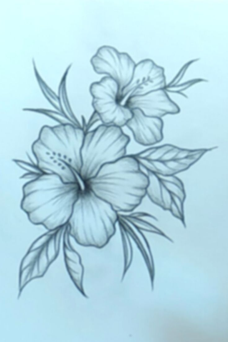 Beautiful Flower Drawing With Pencil Easy Easy Flower Drawings Flower Drawing Pencil Drawings Of Flowers