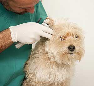 Kysy - ELPF eläinlääkärit vastaavat! http://www.elpf.fi/kysy.php
