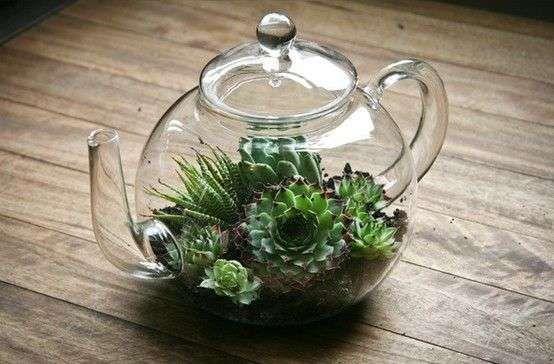Theepot als terrarium voor vetplanten leuk om op een dienblad te zetten met kop en schotel en daarin b.v een kaarsje of ook een plantje