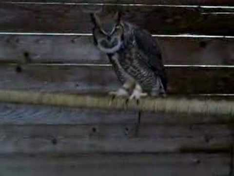 22 best owl moon jan images on pinterest owls owl and owl moon 631798ee3377db302f0ecc8d2aa1c025 study websites raptor centerg fandeluxe Choice Image