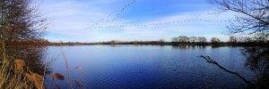 miggration des grues cendrées a commencée dans le Parc naturel de la brenne. lire l'article complet sur http://loirexplorer.com/grues-cendrees-migration-france/