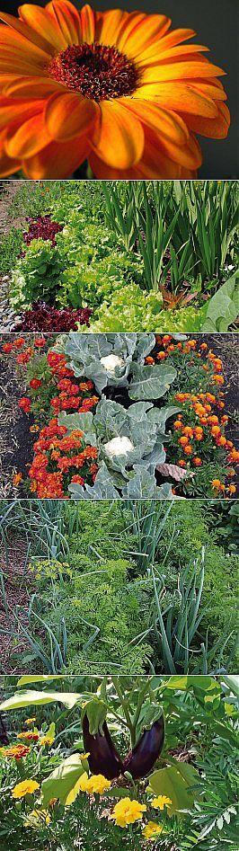 Совместимость огородных культур, или Зачем растениям спутники? | Самоцветик