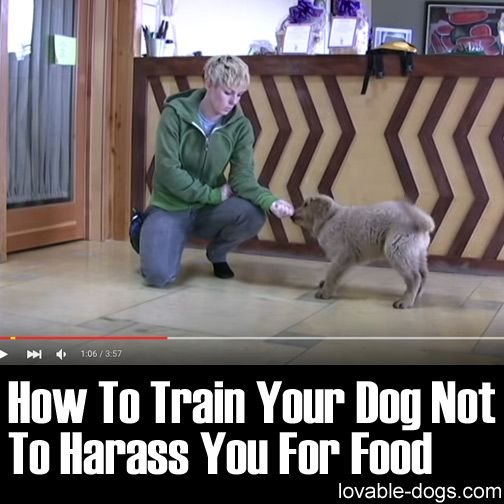 How To Train Your Dog Not To Harass You For Food ►► http://lovable-dogs.com/how-to-train-your-dog-not-to-harass-you-for-food/?i=p