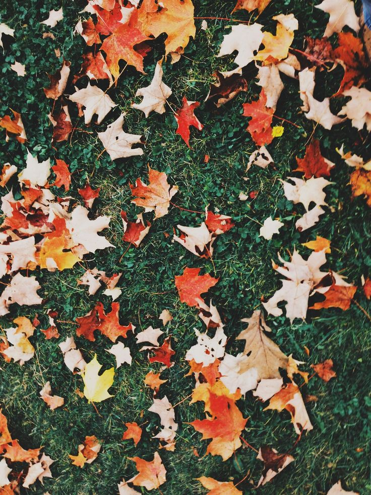 it's the basic things about fall, like the leaves changing colors, that make it one of my favorite times of the year.
