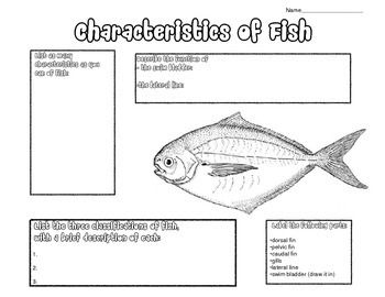 25 best ideas about science textbook on pinterest for Bony fish characteristics