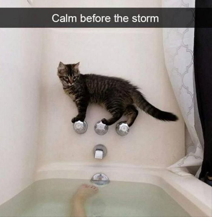 Funny Animal Picdump of The Day 376 (17 Photos)