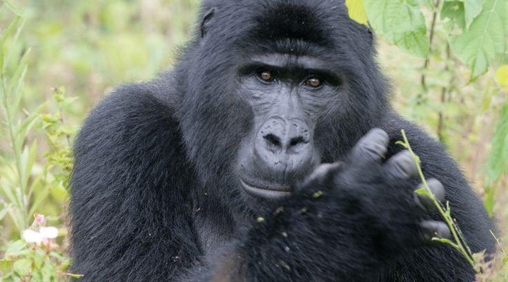 Uganda   © Wild Places Safaris