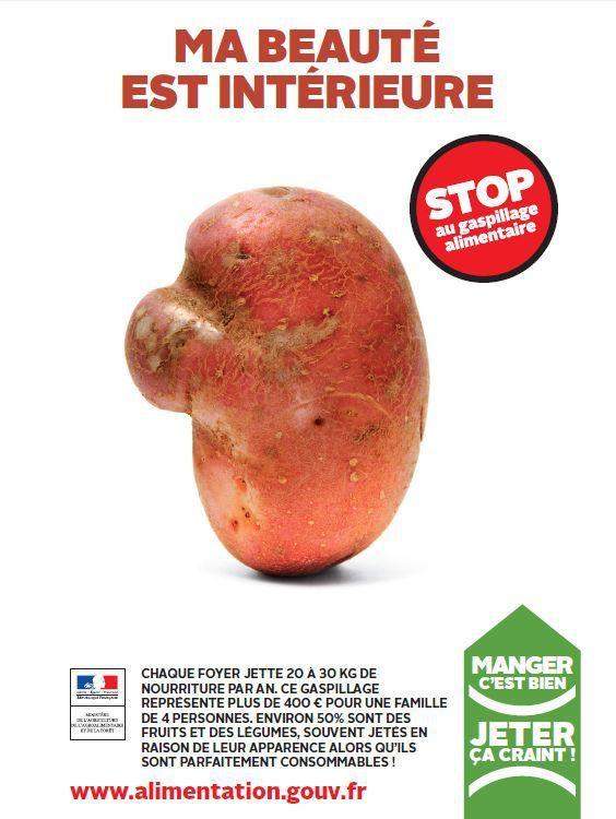 Pomme de terre anti gaspi