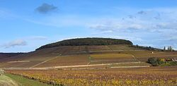 Corton-Charlemagne - White burgundy, Chardonnay, 300.000 bottles per year. One ot the top grands crus de Corton since more than 1000 years