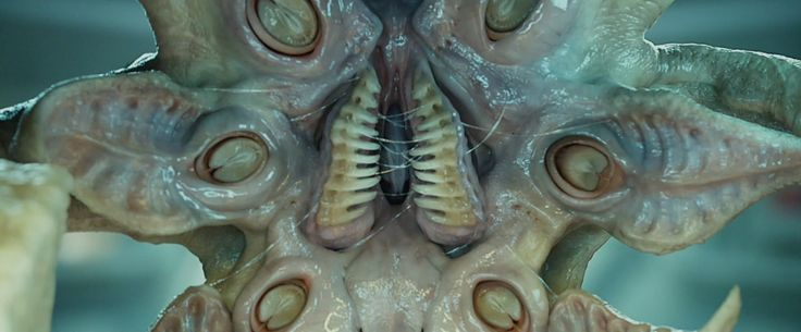 facehugger - Google Search   Alien   Pinterest   Zoom ...