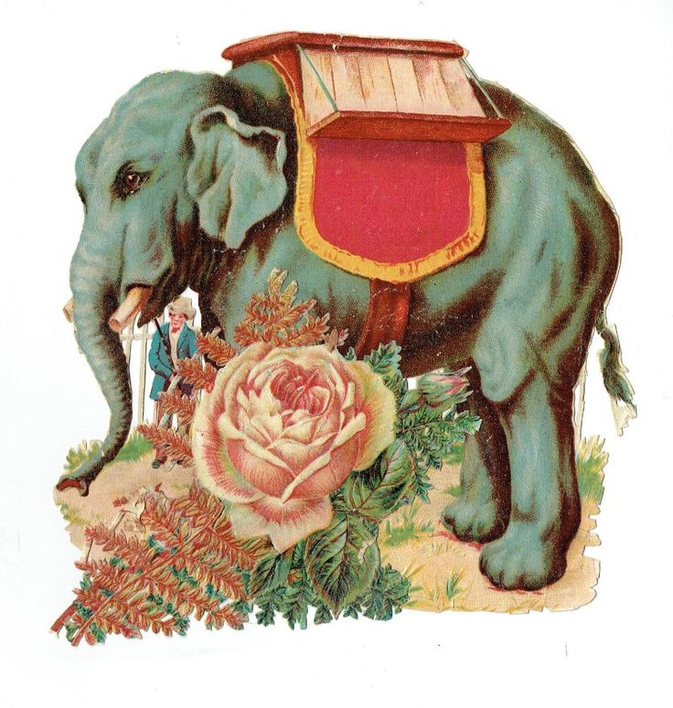 Un chromo - Découpis - Éléphant Cirque - Roses  fr.picclick.com