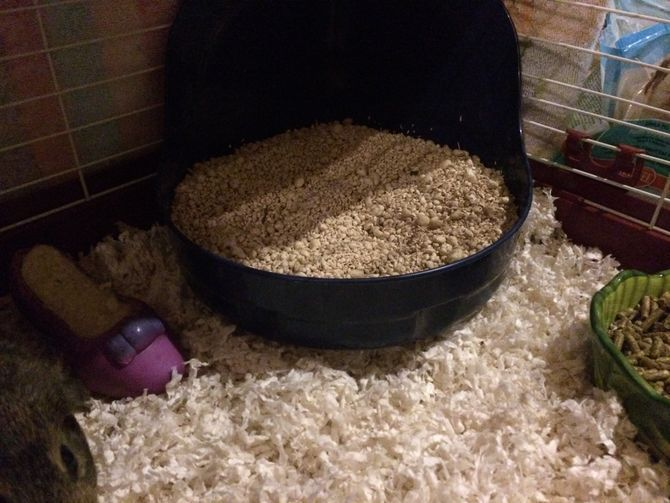 How to Potty Train a Guinea Pig: 10 Steps - wikiHow
