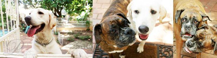 Sammy, Tyson and Bella