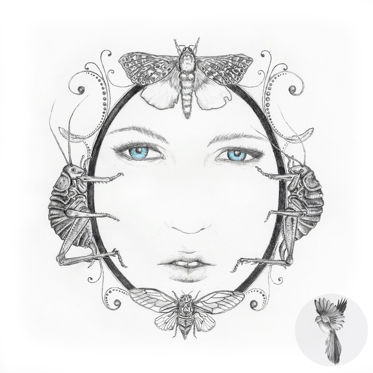 #ElementEdenArtSearch Ladyhawke (for Ladyhawke + Sarah Larnach Talenthouse Comp) A4 Graphite