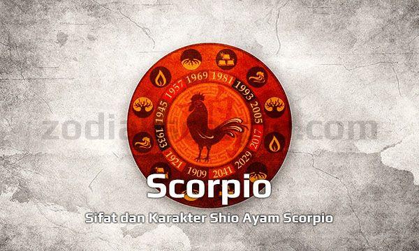 Shio Ayam Scorpio yang Teliti