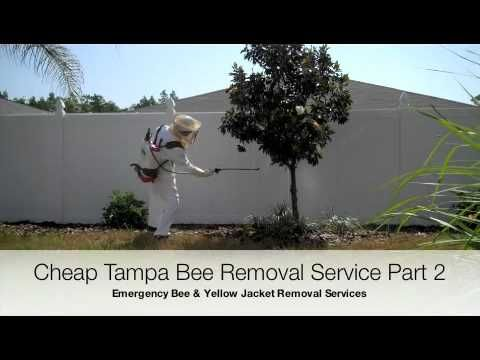 Tampa Bee Exterminator Part 2 of 2