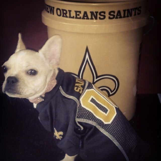 My two favorite things. A French bulldog and the Saints!! <3