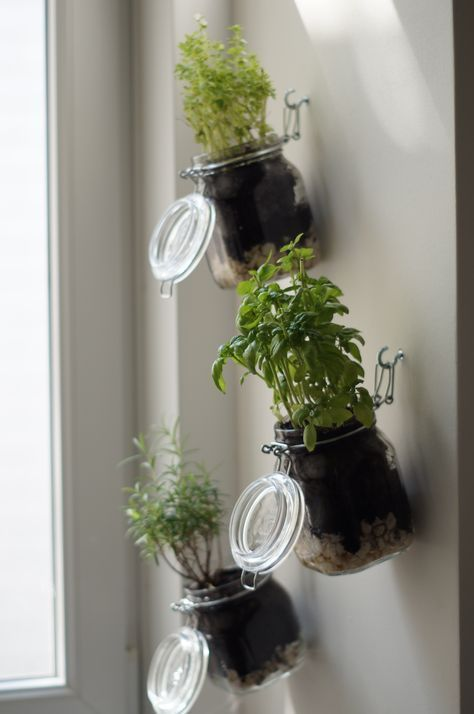 DIY herb garden, step by step guide, indoor herb garden by yourself …