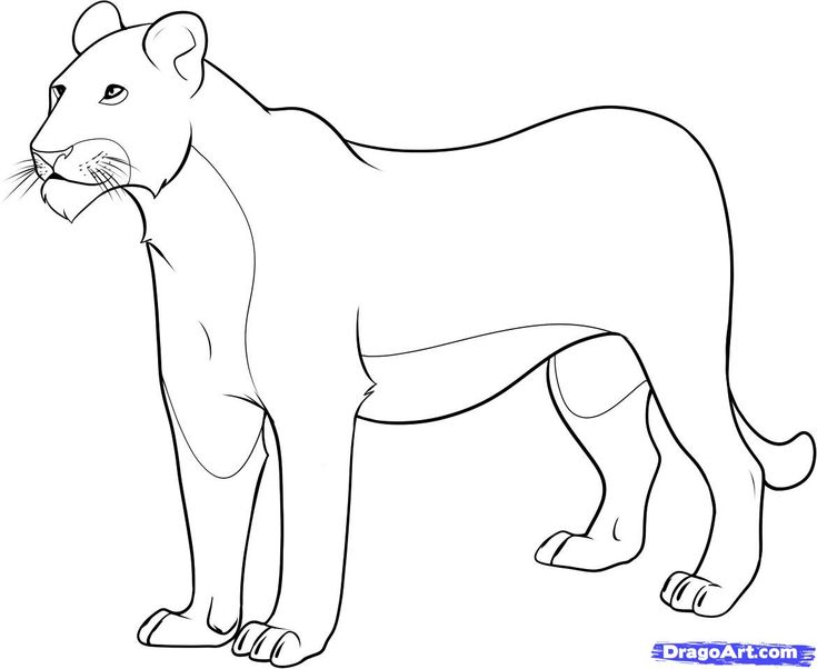 female lion coloring pages