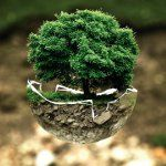 Arbor Day is celebrated in China and Taiwan on March 12 to commemorate death anniversary of Dr. Sun Yat-sen
