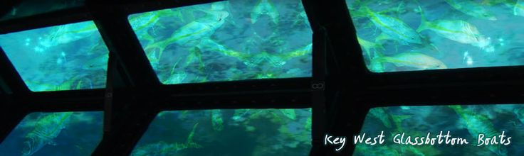 Key West Glassbottom Boat | Key West Vacation