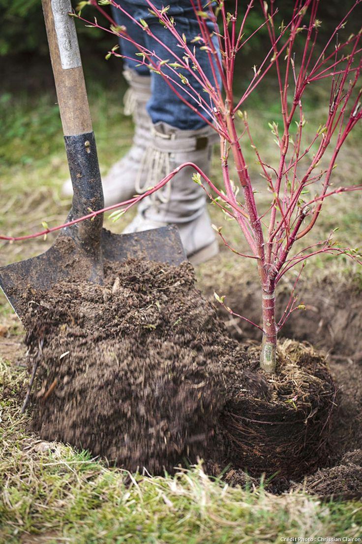Les 73 meilleures images propos de jardin arbustes for Jardin et plantation