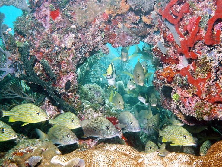 15 Must-see Marine Ecosystem Pins | Food webs, Ecosystems ...
