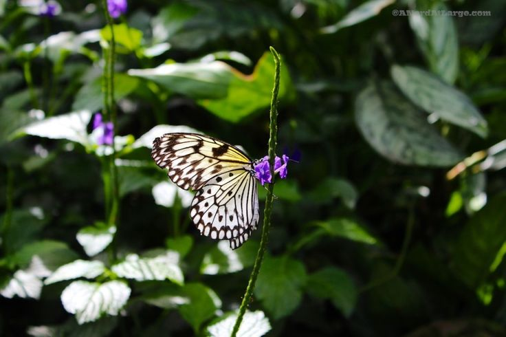 The Niagara Butterfly Conservatory Experiment