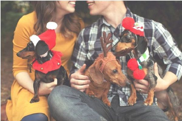 All Dressed Up -  Dog Christmas Cards Ideas For Anyone Who's Obsessed with Their Pup  - Photos #DogChristmas