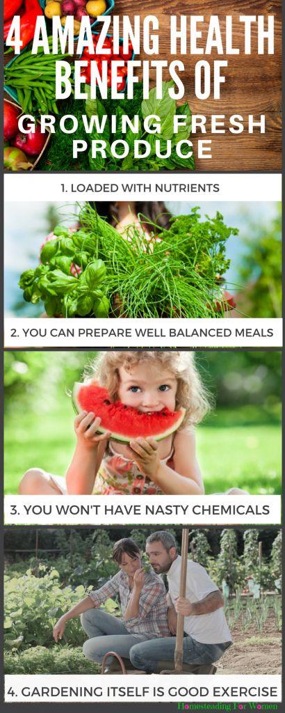 De 989 B Sta Gardening Ideas Diy Bilderna P Pinterest D Ck Prydnader Och Tr Dg Rdsarbete