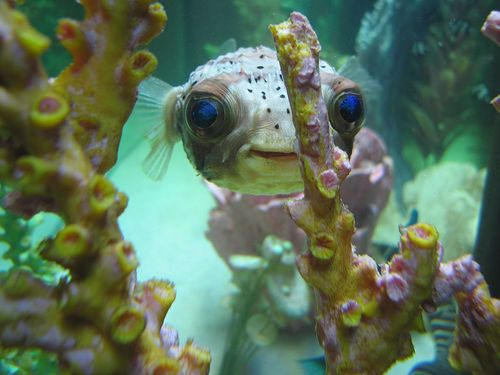 10 best images about saltwater tanks on pinterest for Well water for fish tank