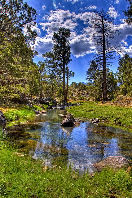 Pine Valley creek    Starting on Pine Valley mountain, this small stream keeps the reservoir full and is fun to fish.