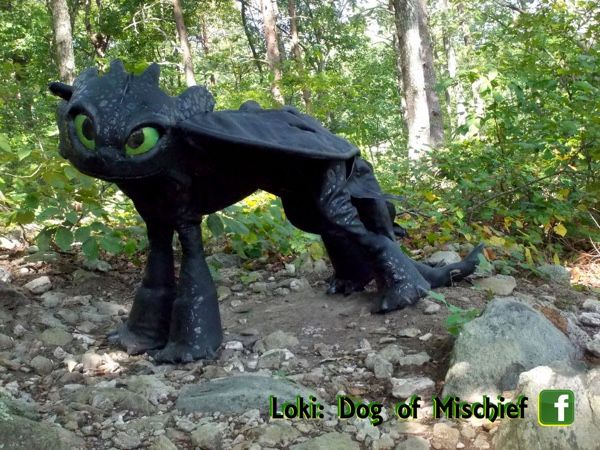 Make An Amazing Toothless Costume For Extremely Patient Dogs
