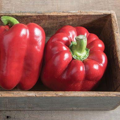 Paladin Pepper Seeds (Capsicum annuum) + FREE Bonus 6 Variety Seed Pack - a $30 Value!