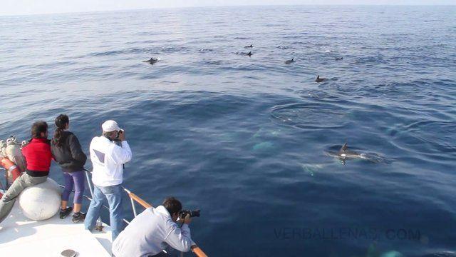 Ballenas y delfines: Momentos mágicos en la mar. Whales and dolphins: Magic moments at sea.. Algunas de las imágenes más emocionantes de nue...