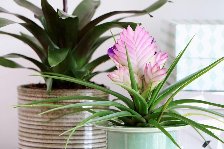 vtwonen, Tropische planten, fotografie & styling: Marij Hessel