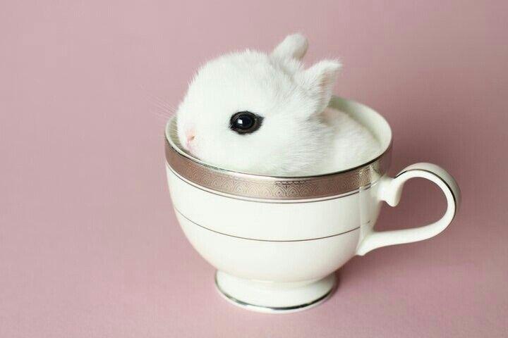 Заяц в кружке картинка