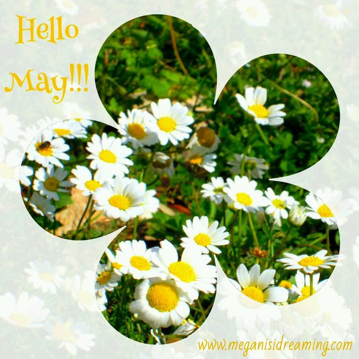 Welcome May 2017
