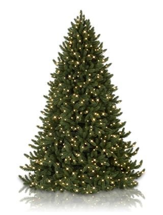 Vermont White Spruce Artificial Christmas Trees, Vermont White Spruce LED Pre Lit Christmas Trees | Balsam Hill Australia
