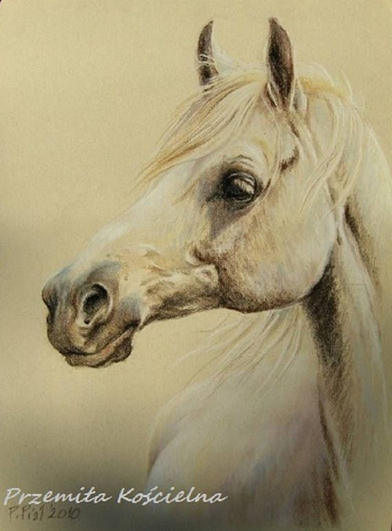 Custom horse portrait Pastel drawing on colored pastel paper. Framed Art.  #horse #portrait #animal #art #pastel #painting #equestrian #equine #canisartstudio