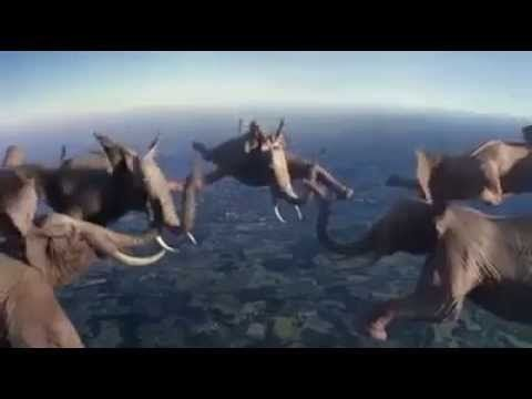 Elephants Skydive and More! Amazing! | Swag Viral Video