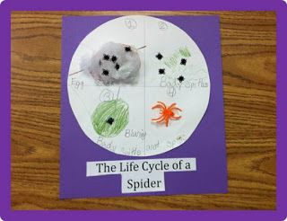 Primary Science: Spider Life Cycle I love watching them problem solve through  how to build the life cycle!